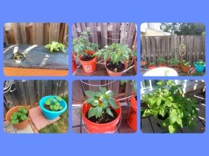 Garden beginning 2015